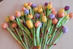 tulipány Liberec