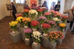 Tulipánový měsíc - výstava tulipánů pro Amelii v Karolinu2