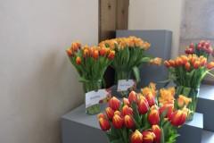 Tulipánový měsíc - tulipány v Karolinu